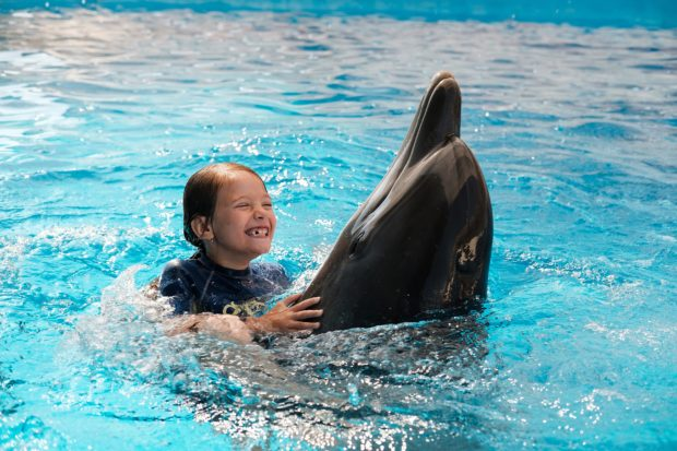 child swimming with dolphins