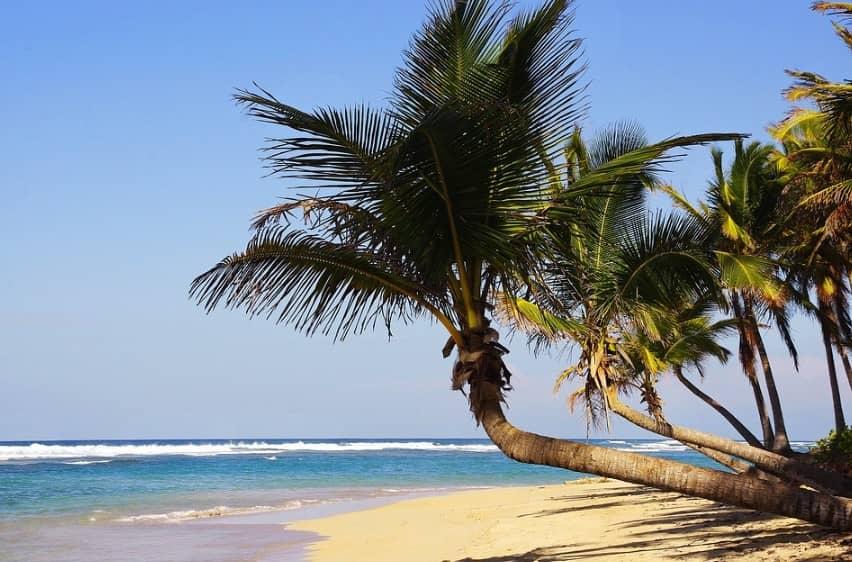 palmeras en playa bavaro